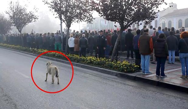 10 Kasım'dan Kalan En Özel Kare! Saygı Duruşu Boyunca Yerinden Kıpırdamayan Köpek Hayrete Düşürdü