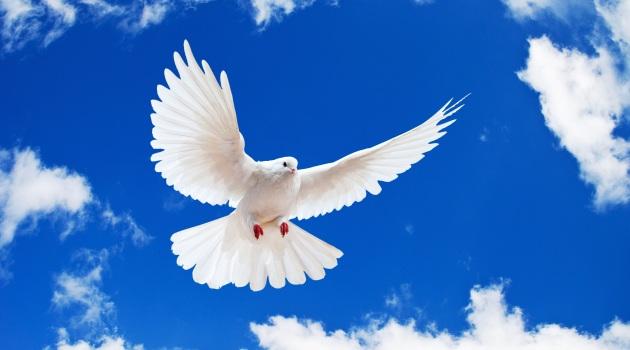Biz Yine de Bıkmadan Barışı Anlatalım, Belki Anlarlar…