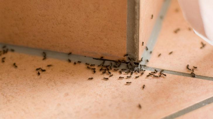 Böceklerden Kurtulma Yöntemleri