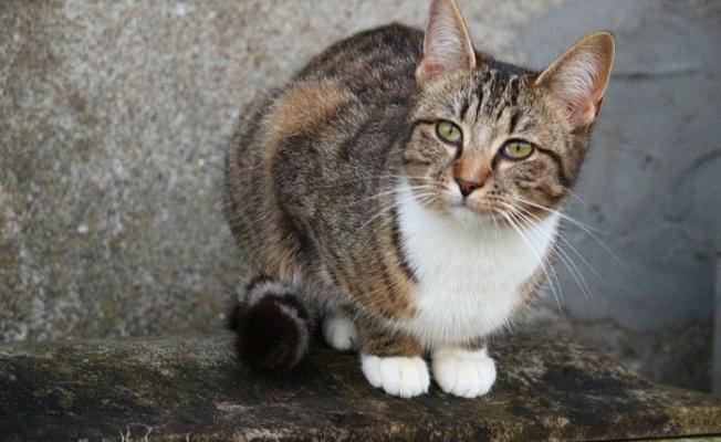 Dünyada Bir İlk! Elini Kedi Isıran Kadın Hayatını Kaybetti