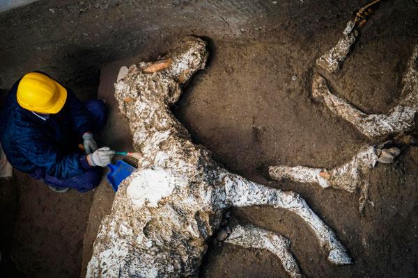 Gören Çığlık Attı! Bir Villanın Bahçesinde Atları Bu Halde Buldular