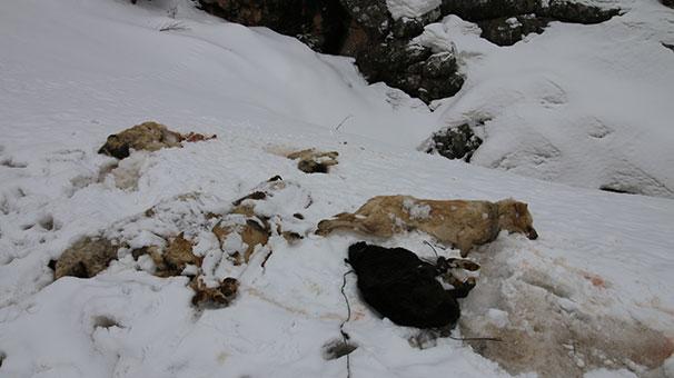 Konya'da Vahşet! 7 Köpek Ayakları Bağlı Halde Ölü Bulundu