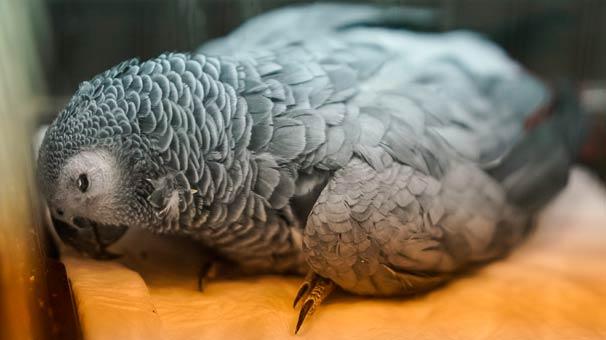 Son Dakika! Murat Özdemir'in İşkence Yaptığı O Papağandan Kötü Haber Geldi!